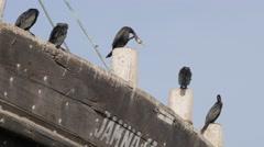 Darter birds on boat in harbour,Porbandar,India Stock Footage
