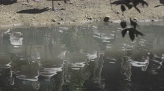 Flamingos Reflection In Water Stock Footage