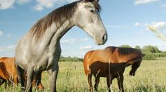 Horses in Green Field Stock Footage