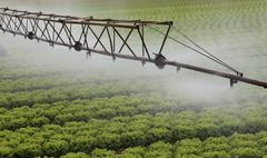 Automatic irrigation system of a cultivated field of green lettuce in summer Stock Photos