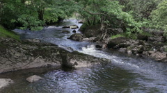Stream with small waterfall running through a wood in Snowdonia, North Wales Stock Footage