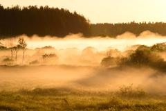 Sunrise on foggy morning Stock Photos