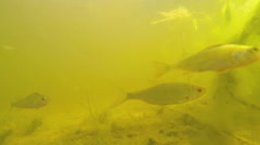 Fish swim in the lake at the bottom Stock Footage