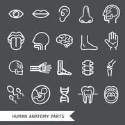 Human anatomy body parts detailed icons set. Vector illustration Stock Illustration