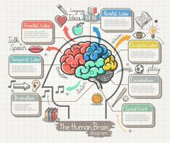 The Human Brain Diagram Doodles Icons Set. Vector Illustration. Stock Illustration