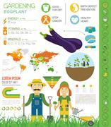 Gardening work, farming infographic. Eggplant. Graphic template. Flat style d Stock Illustration