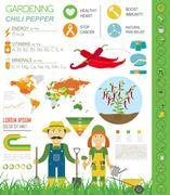 Gardening work, farming infographic.Chili pepper. Graphic template. Flat styl Stock Illustration