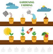 Gardening work, farming infographic. Graphic template. Flat style design Stock Illustration
