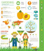 Gardening work, farming infographic. Apricot. Graphic template. Flat style de Stock Illustration
