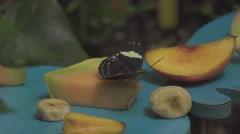 Butterfly Drinks a Fruit Stock Footage