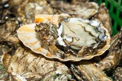 Fresh oysters straight from the sea to market in France Stock Photos