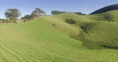 Aerial of cows grazing on grass in farm, coromandel Peninsula, New Zealand Stock Footage
