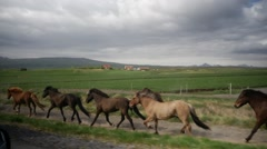 Wild Horses Gallop Down Path in Iceland Countryside Stock Footage