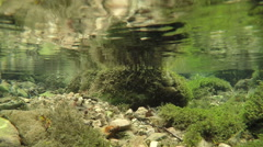Underwater shot of river Susica, mountain Durmitor, Montenegro. Stock Footage