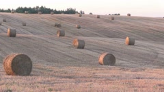 Straw bales on the field Stock Footage