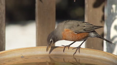 Bird drinks from bird bath then flies away Stock Footage