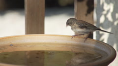 Bird drinks from bird bath then hops away Stock Footage