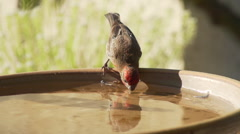 Two birds drink then fly away Stock Footage
