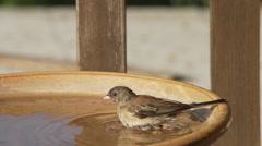 A small bird takes a bath then flies away Stock Footage