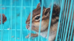 The Chipmunks in cages, lost freedom Stock Footage
