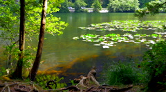 4K Mountain Pond, Two Tree Sapling Trees, Lily Pads and Road in Background Stock Footage