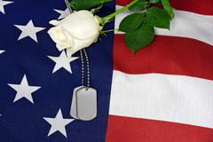 Military dog tags and white rose Stock Photos