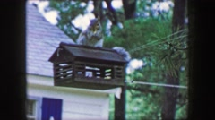 1959: Squirrel invader bird feeder habitat house hanging front yard wildlife Stock Footage