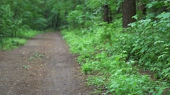 Park alley in spring light. Green part of the city. Stock Footage