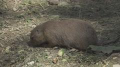 Prairie Dog In the Wild Stock Footage
