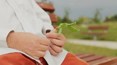 Adult Man Hands Rubbing Leaves Stock Footage