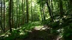 German Forest (4K UHD footage) Stock Footage