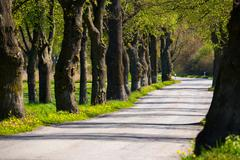 Asphalt road and tree alley Stock Photos