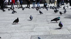 Pigeons on a place Stock Footage