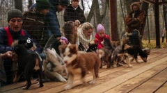 People play with puppies Husky dog in a cage in Ethno-cultural complex Stock Footage