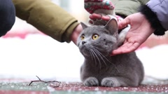 Several children hands stroke gray cat lying on artificial covering outdoor Stock Footage