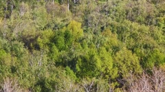 Beautiful green and naked trees are swinging, top view. Stock Footage