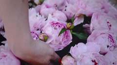 Professional Florist Start Making Bouquet of Pink Peonies for Wedding Ceremony Stock Footage