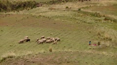 Indigenous shepherdess with child and Sheep flock in Andes of Peru Stock Footage