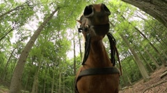 Working with horse in the forest  Stock Footage