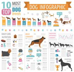 Dog info graphic template. Heatlh care, vet, nutrition, exhibition Stock Illustration