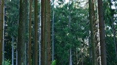 Forest scene footage (detailed 4K UHD clip) Stock Footage