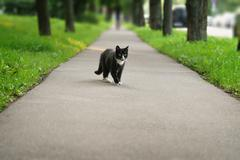 Homeless black and white cat on asphalt Stock Photos