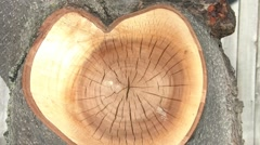 Heart in Tree Stock Footage