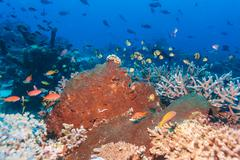 Underwater Landscape with Hundreds of Fishes Stock Photos