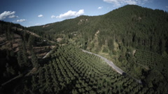Aerial: High to Low Overview of Fruit Orchard in A Rural Valley Stock Footage