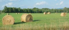 Hay bales in a green field country scene Stock Photos
