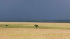 TREES SAVANA WILDERNESS MAASAI MARA KENYA AFRICA Stock Footage
