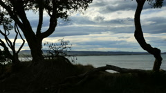 New Zealand Moeraki coast through trees Stock Footage
