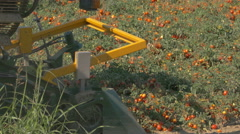 Tomato harvesting machinery in action. Stock Footage