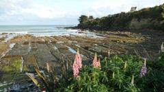 New Zealand Kaka Point flowers and marine terrace Stock Footage
